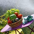Vegetables and water jet in garden — Stock Photo