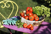 Some fresh vegetables in garden — Foto de Stock