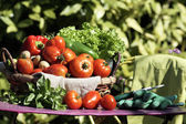 Vegetables on table in garden — Stock Photo