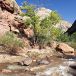 Rapids of the Virgin River — Stock fotografie