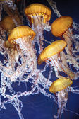 Jellyfish with blue ocean water — Stock Photo