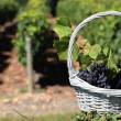 Bottle of wine and grappes in basket — Foto de Stock