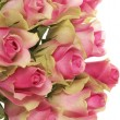 Panoramic roses — Stock Photo