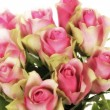 Glamour glow roses — Stock Photo