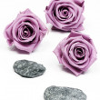 Pink roses and stones — Stock Photo