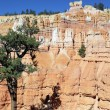 Stock Photo: Vertical view of Navajo Trail in Bryce Canyon
