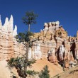 View of Navajo Trail in Bryce Canyon — Stock Photo