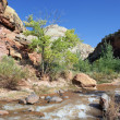 Rapids of Virgin River — Stock fotografie