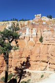 Vertical view of Navajo Trail in Bryce Canyon — Stock Photo
