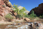 Rapids of Virgin River — Stock Photo