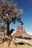 Tree and Monument Valley — Stock Photo
