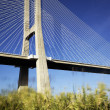 Vasco da Gama bridge and grenn grass - Stok fotoraf