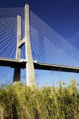 Vasco da Gama bridge and grenn grass — Stockfoto