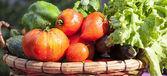 Vue panoramique de légumes humides — Photo