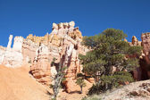 Navajo Trail in Bryce Canyon — Stock Photo