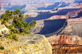 Horizontal view of famous Grand Canyon — Stock fotografie