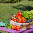 Garden harvest of vegetables — Stock Photo