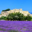 Stock Photo: Lavender field and old town of Grignan