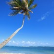 Tropical beach with palm tree — Stock Photo #30404841