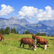 Stock Photo: Panoramic view of french Alps