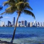 Florida Style, Miami — Stock Photo #39923535