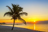 Beach with palm tree at sunset — Stock Photo