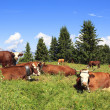 Stock Photo: Landscape with cows