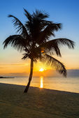 Palm tree on a beach at sunset — Stock Photo