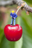 Cherry time — Stock Photo