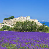 Lavender field and town of Grignan — Stock Photo