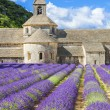 Abbey of Senanque and blooming rows lavender flowers — Stock Photo