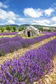 Lavender world — Stock Photo