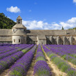 Abbey of Senanque and lavender — Stock Photo