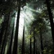 Forest — Stock Photo #30345213
