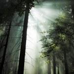 Dark forest — Stock Photo #30686291