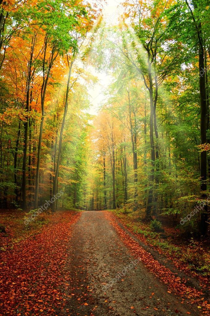 Фотообои Лесной тропе