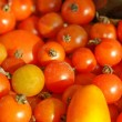 Tomatoes picture - Stock Photo