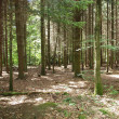 Forest of trees - Stock Photo
