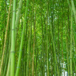 ������, ������: Bamboo picture