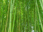 Bamboo picture — Stock Photo