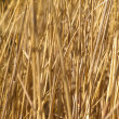 Grass meadow weed — Stock Photo #21267205