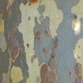 Bark picture — Stock Photo