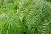 Ferns picture — Stock Photo