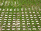 Car parking lot grass — Stock Photo