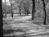 Tiergarten park, Berlin — Stock Photo