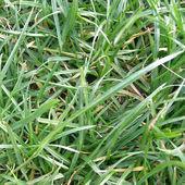 Lutte contre les mauvaises herbes prairie — Photo