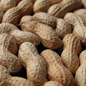 Peanut picture — Stock Photo