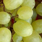 Grape picture — Stock Photo