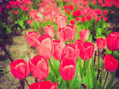 Retro look Tulips — Stock Photo