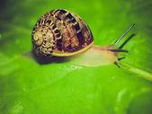 Retro look Snail slug — Stock Photo